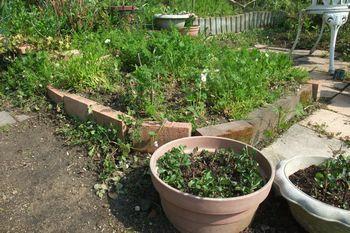 350 植木鉢に植え込んだ・After