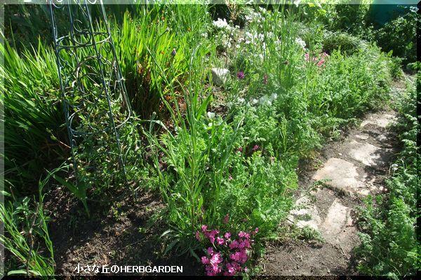 600 南斜面・ケリー達の花壇