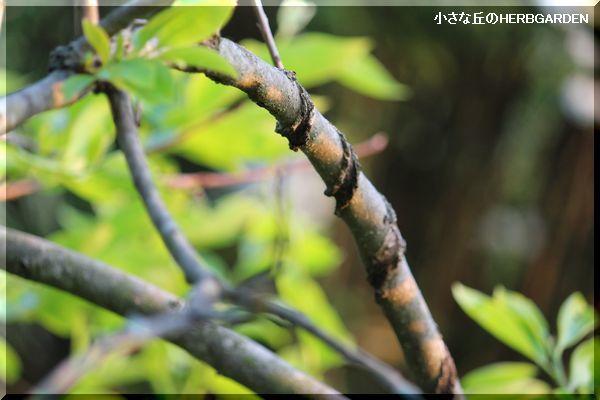 600 痛々しくエグられた枝