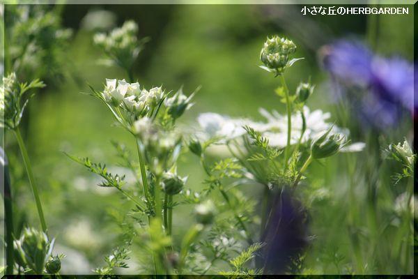 600 ケリーの花壇 1