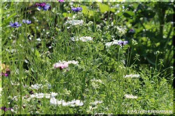 600 ケリーの花壇 2