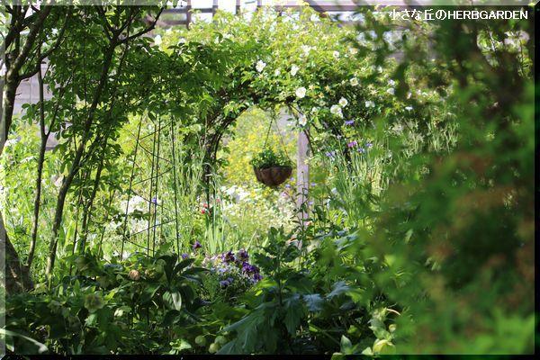 600 garden畑