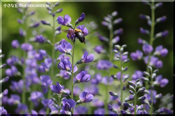 600 青紫の花と蜂
