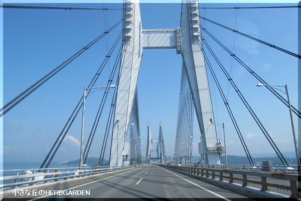 600 斜張橋