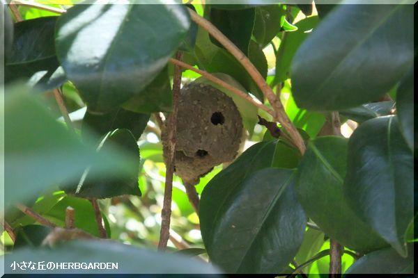 600 スズ蜂の巣(泥蜂)