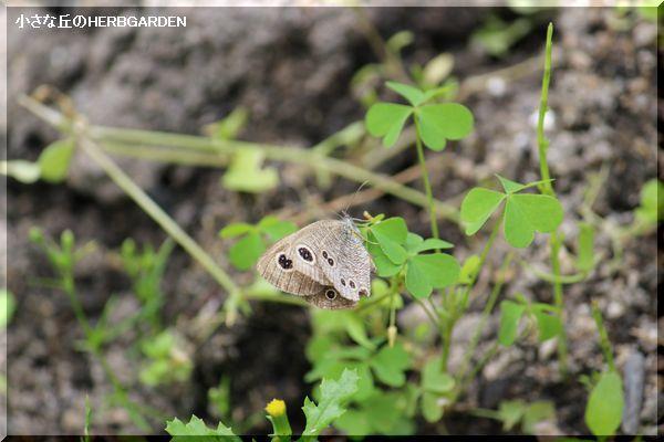 600 小さい蝶