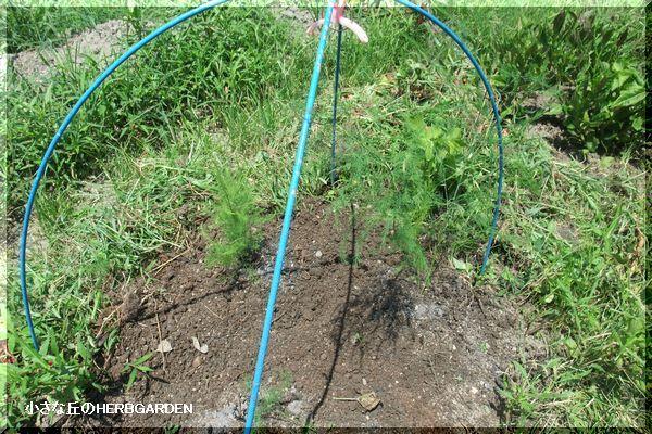 600 雑草を抜いて堆肥を漉き込み
