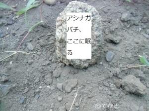アシナガバチ,墓