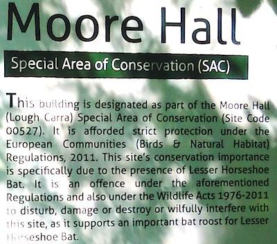 ムーアホールに棲むというヒメキクガシラコウモリ