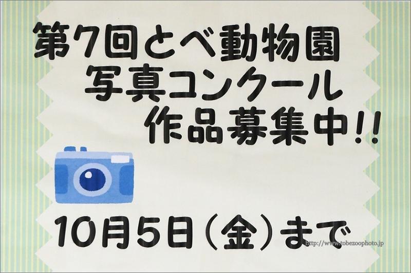 とべ動物園写真コンクールの作品を募集中 (締切りは、平成30年10月5日)