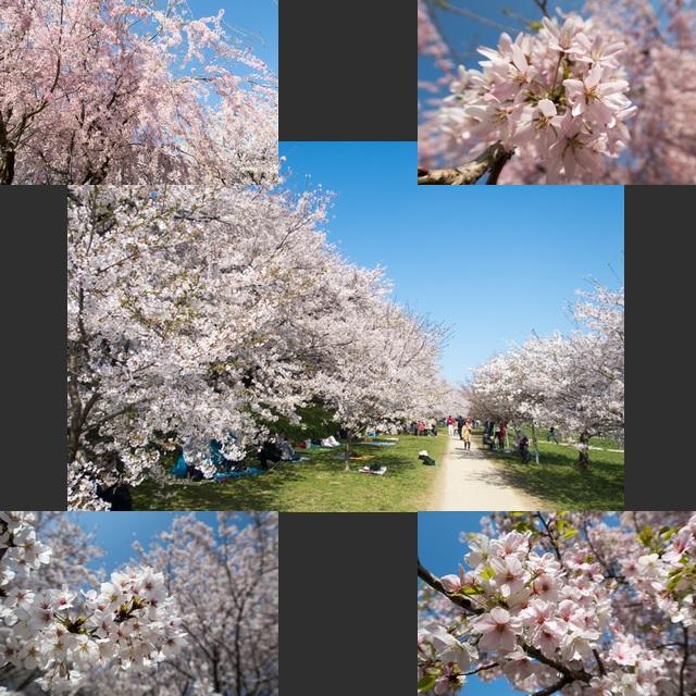 お花見1(9)