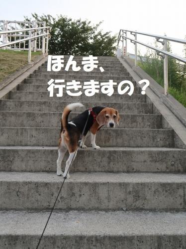 IMG_4155-2.jpg