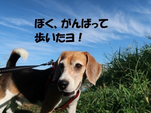 IMG_6536-2.jpg