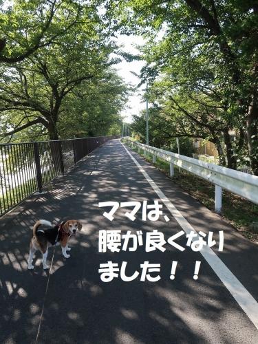 IMG_6558-2.jpg