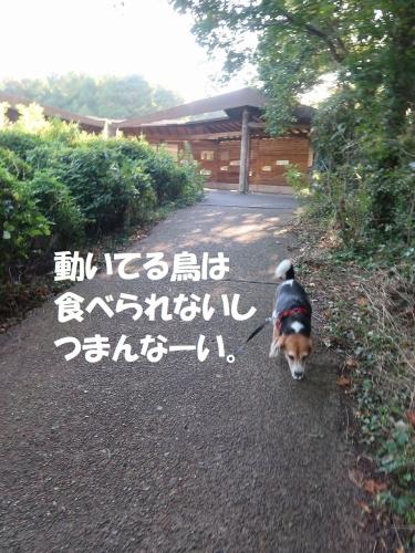 IMG_7153-2.jpg