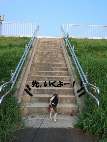 IMG_7494-2.jpg