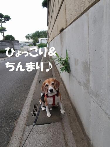 IMG_8327-2.jpg