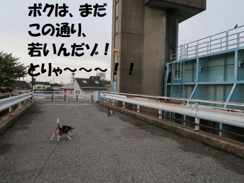 IMG_8389-2.jpg