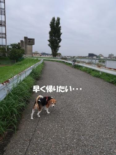 IMG_8555-2.jpg