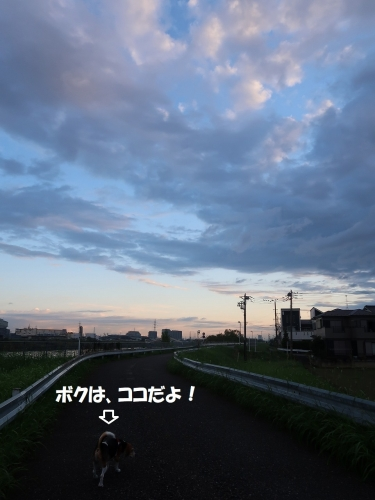 IMG_9075-2.jpg