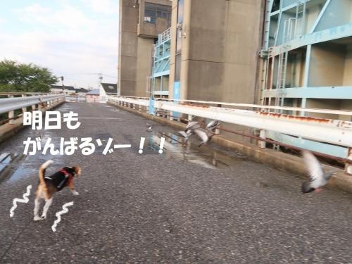 IMG_9156-2.jpg