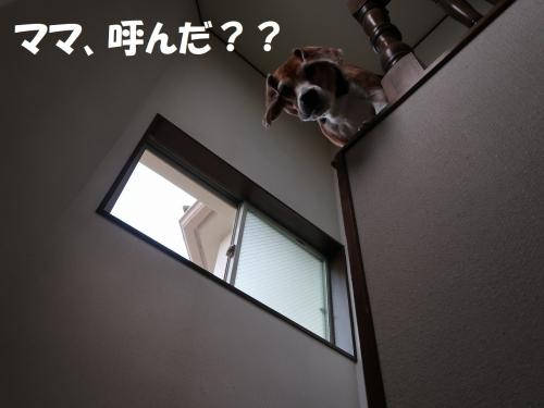 IMG_9401-2.jpg