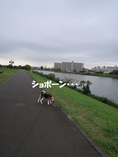 IMG_9429-2.jpg