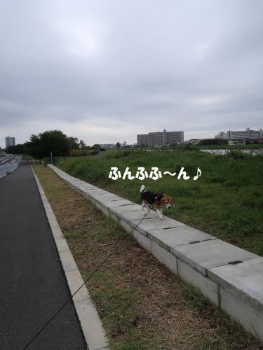 IMG_9476-2.jpg