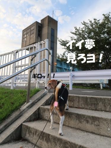 IMG_9512-2-2.jpg