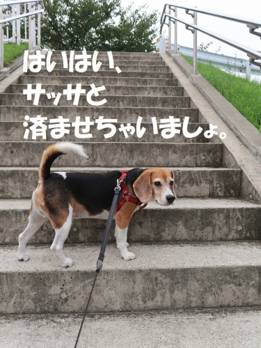 IMG_9590-2.jpg