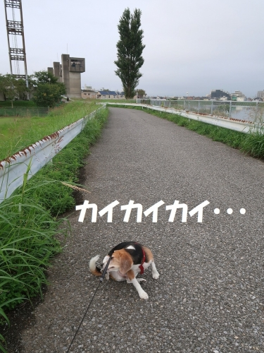 IMG_9599-2.jpg