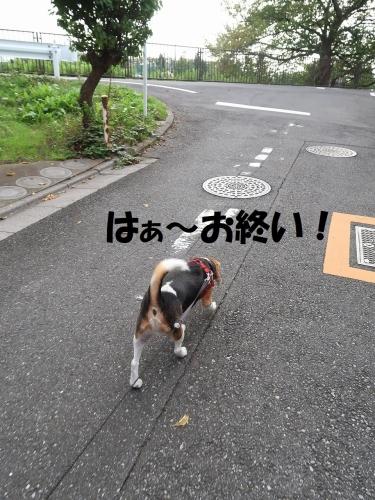 IMG_9609-2.jpg