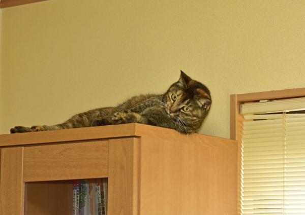 猫1 DSE_0855