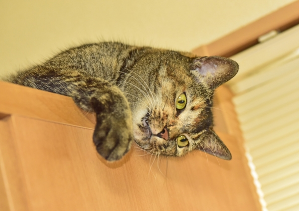 猫2 DSE_0828