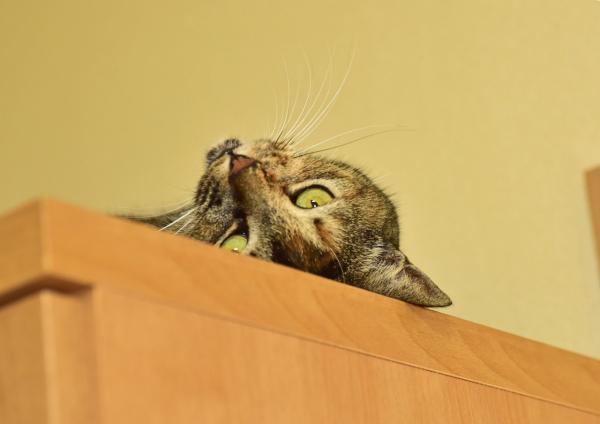 猫3 DSE_0816