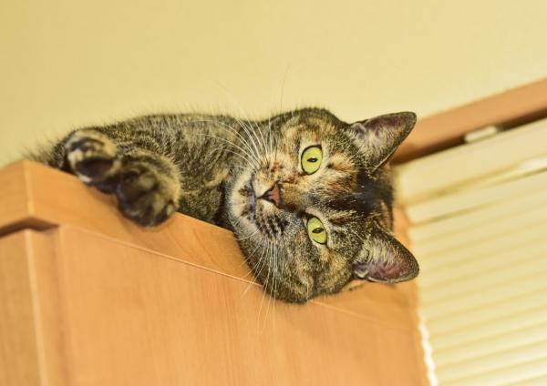 猫4 DSE_0833