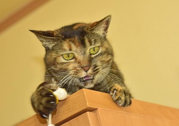 猫5 DSE_0853