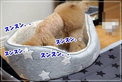 DSC06908.jpg
