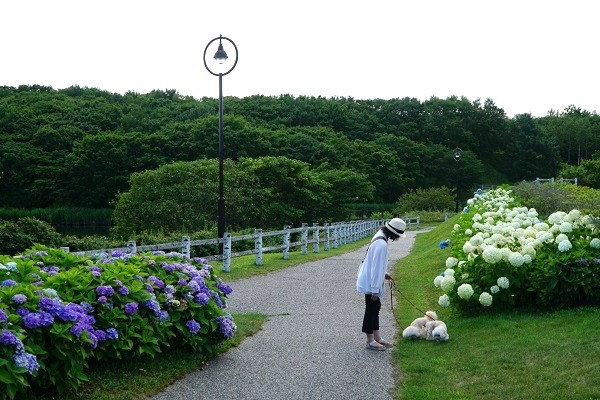 道の駅 縄文ロマン南かやべ / ひょうたん沼公園3
