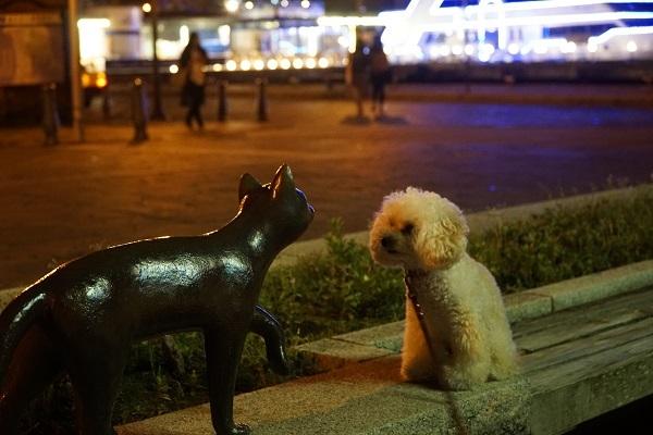 金森へ夜散歩2