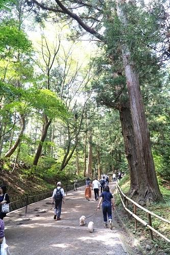岩手・盛岡旅行 世界遺産 「 中尊寺 」1