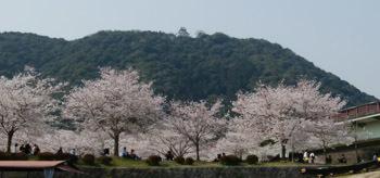 2018 春のお城山