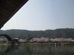 0329 春の吉香公園2