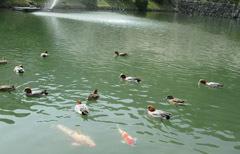 0329 春の吉香公園4