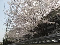 0329 春の吉香公園7