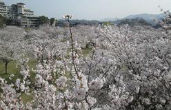 0329 春の吉香公園11