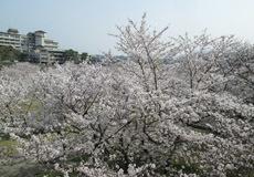 0329 春の吉香公園12