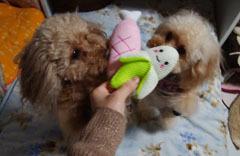 お土産おもちゃにわくわく1