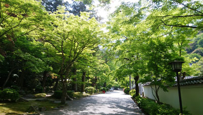 0428 城山新緑の季節1