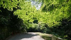 0428 城山新緑の季節5